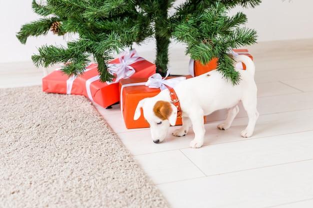 Hund jack russel unter einem weihnachtsbaum mit geschenken und kerzen, die weihnachten feiern