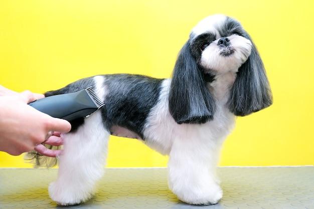 Hund lässt sich im pet spa grooming salon die haare schneiden. nahaufnahme des hundes. schneiden sie den hund mit einem trimmer. groomer konzept.