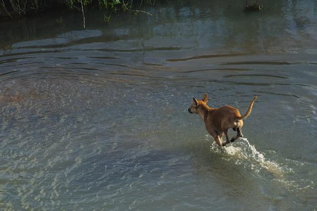 Hund läuft durch wasser auf trockenes land
