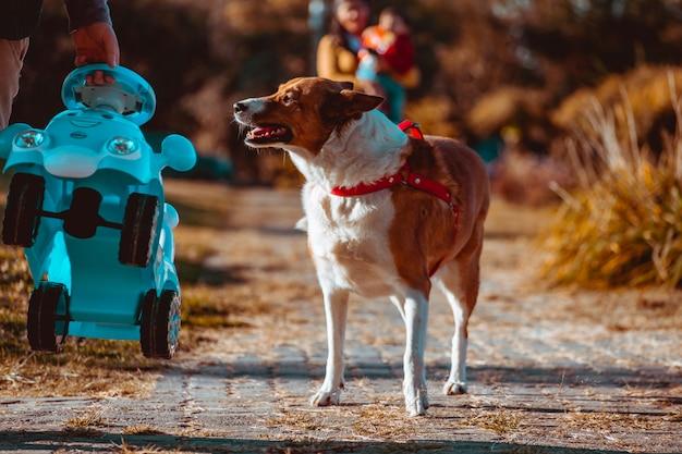 Hund läuft im park