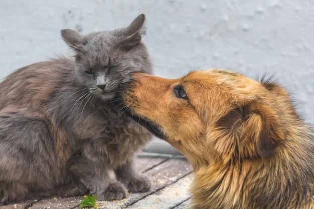 Hund leckt die schnauze einer katze. freundliche beziehung zwischen hund und katze