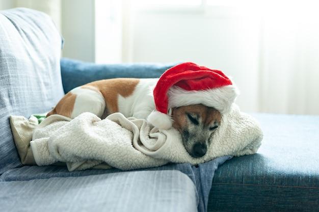 Hund liegt auf dem sofa und trägt eine weihnachtsmütze