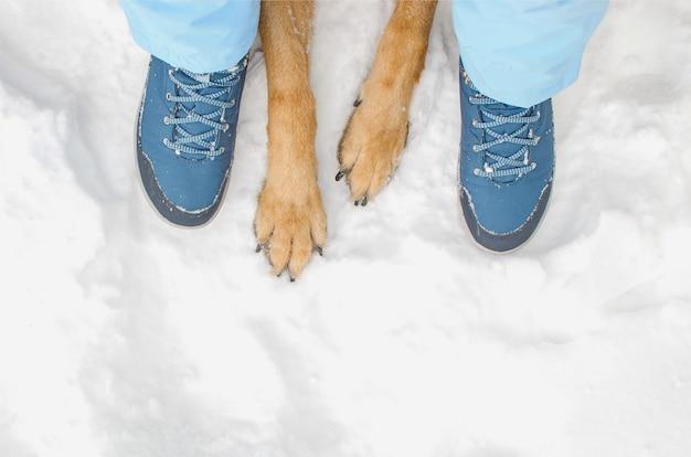 Hund mit besitzer während des winterspaziergangs. draufsicht hundepfoten und menschenfüße auf schnee. tierpflege. der winter geht im freien weiter.