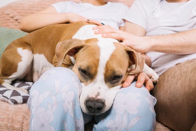 Hund mit besitzern morgens