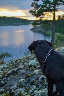 Hund mit blick auf den sonnenuntergang hundesilhouette in der natur abendnatur bei sonnenuntergang sonnenuntergang seeblick von der insel