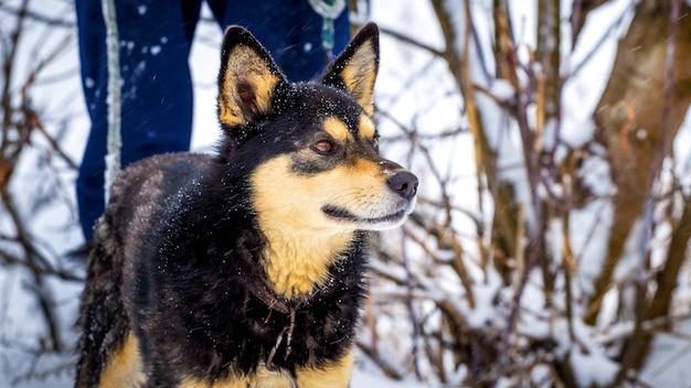 Hund mit dem besitzer bei einem waldspaziergang im winter