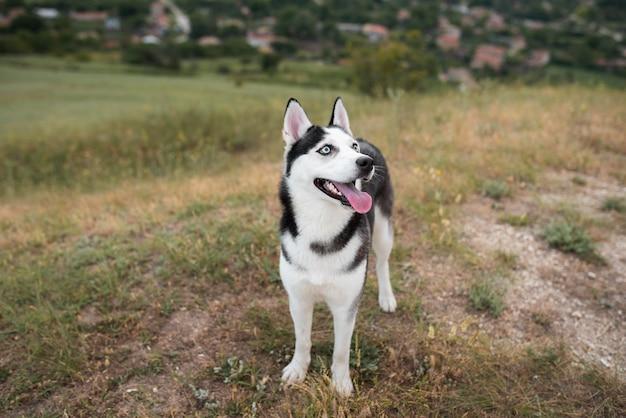 Hund mit herausgestreckter zunge in der natur