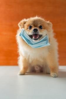 Hund mit luftverschmutzungsmaske zum schutz von staub pm2.