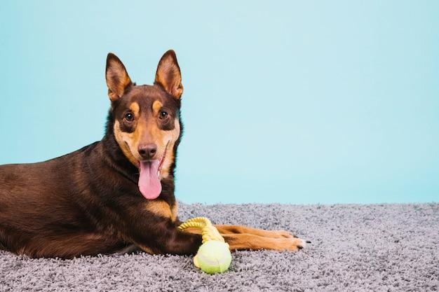 Hund mit tennisball