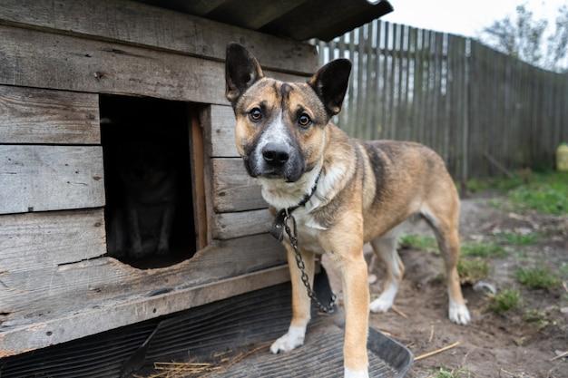 Hund mit traurigen augen sitzt an einer kette in der nähe der hundehütte