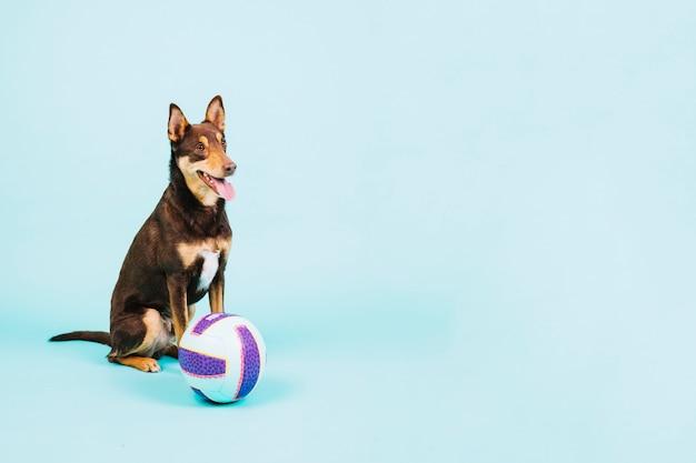 Hund mit volleyball auf der linken seite