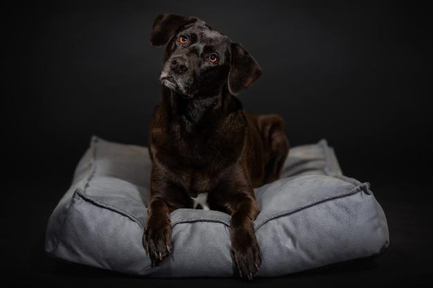 Hund nahaufnahme porträt an dunkler wand