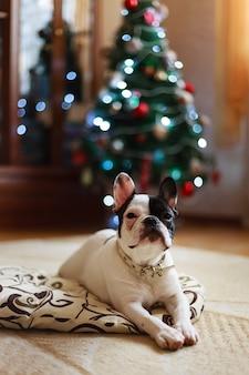 Hund neben dem weihnachtsbaum.