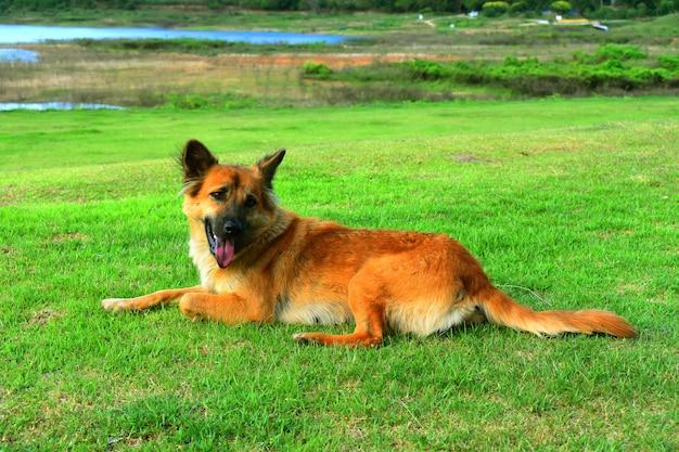 Hund nettes lächeln, das im gras draußen spielt sitzt