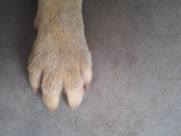 Hund pfote füße