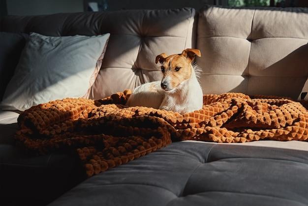 Hund ruht auf sofa unter decke