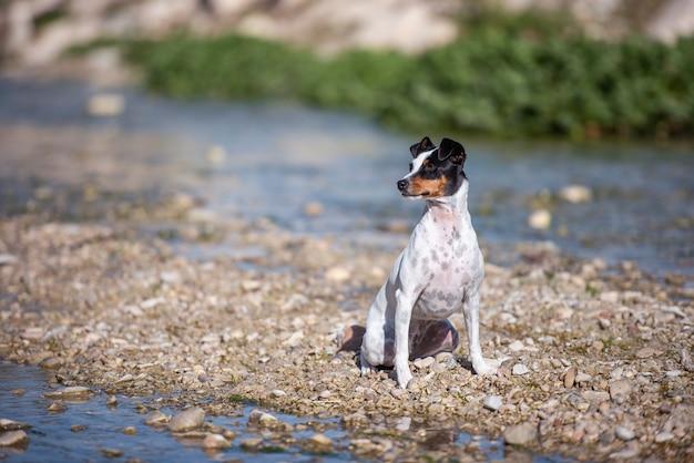 Hund sitzt am flussufer