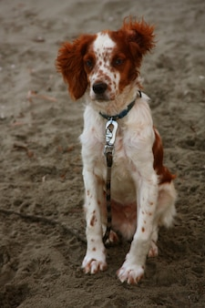 Hund sitzt am strand und wartet etwas