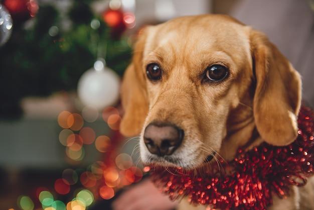 Hund sitzt am weihnachtsbaum