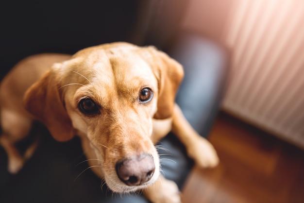 Hund sitzt auf dem sofa