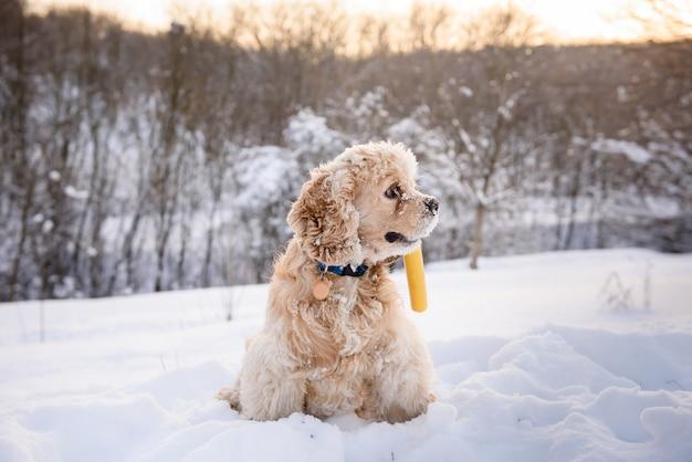 Hund sitzt in einer schneeverwehung mit stock im mund