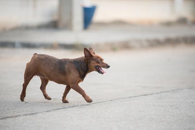 Hund spaziergang auf der straße