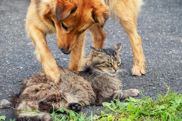 Hund spielt mit einer katze
