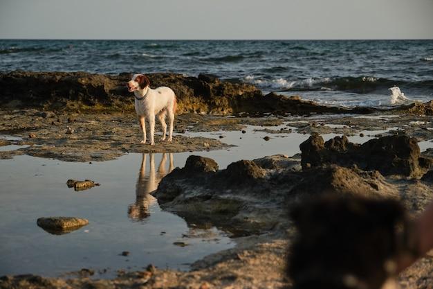 Hund steht auf nassem strand in der nähe von wogendem meer