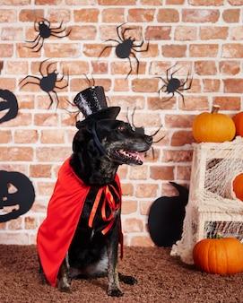 Hund trägt roten umhang und schwarzen hut
