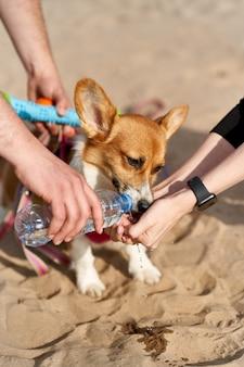 Hund trinkt gierig wasser, besitzer gießt flüssigkeit aus der flasche in die handfläche. auf tiere aufpassen