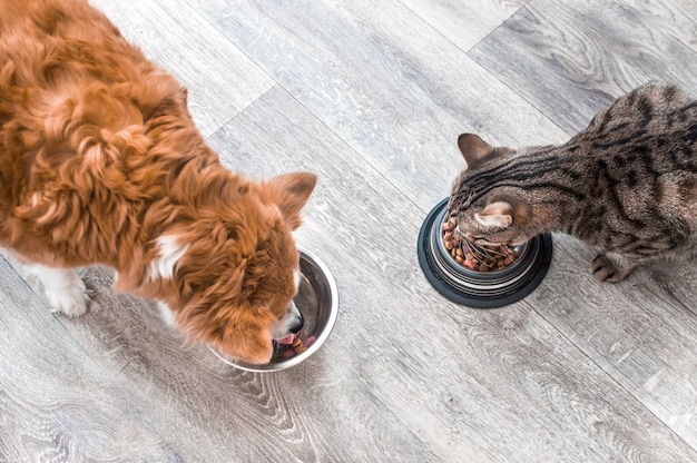 Hund und katze essen zusammen aus einer schüssel mit futter. tierfütterungskonzept