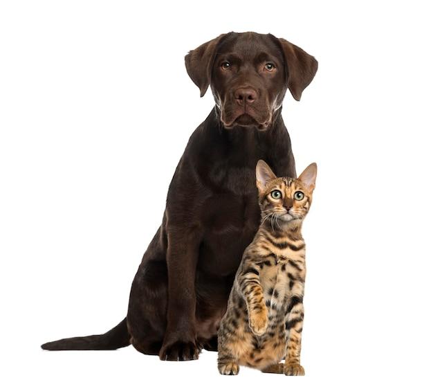 Hund und katze sitzen isoliert auf weiß