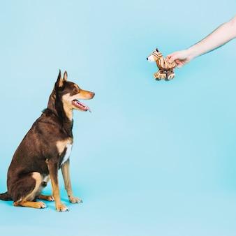 Hund und spielzeug haustier