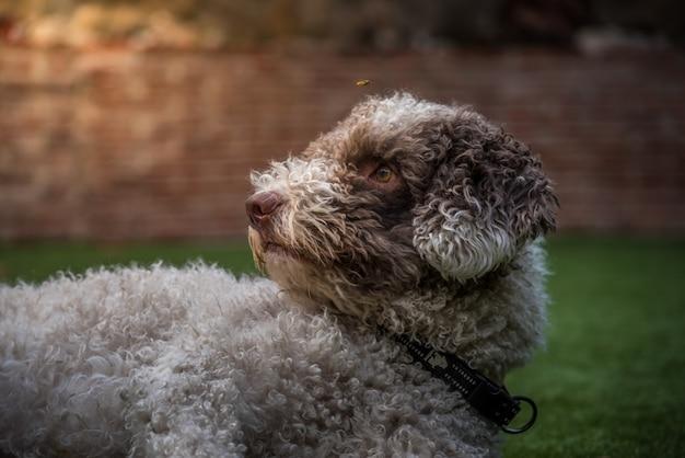 Hund und wespe