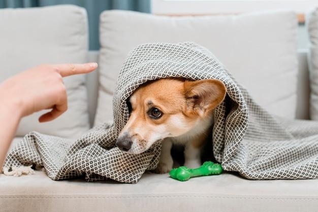 Hund unter decke wird gescholten