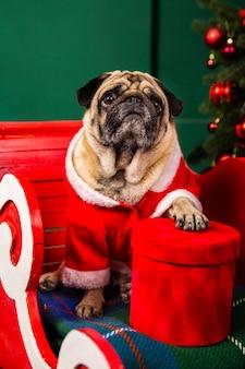 Hund verkleidet als weihnachtsmann im schlitten sitzen