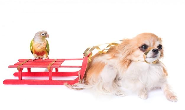 Hund, vogel und weihnachten