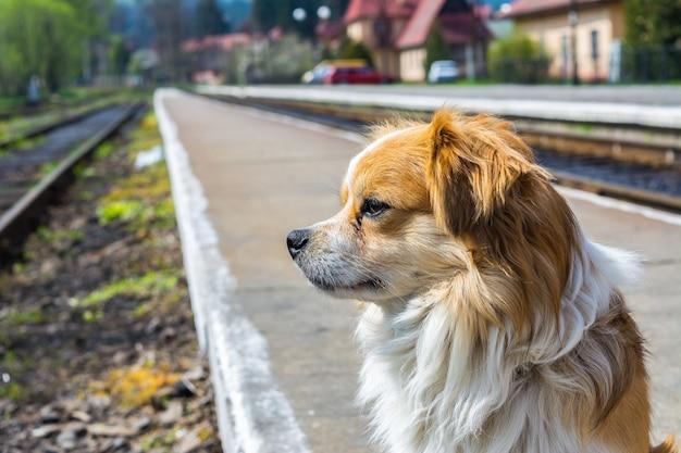 Hund wartet am bahnhof