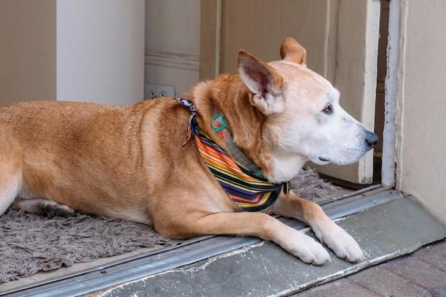 Hund wartet auf seinen besitzer vor der haustür des ladens.