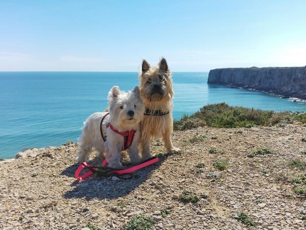 Hunde am rande in portugal