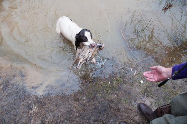 Hunde canin hunde leber beindecke