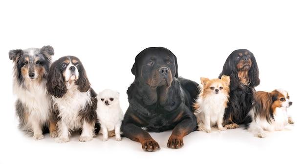 Hunde im studio