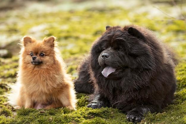 Hunde in der natur