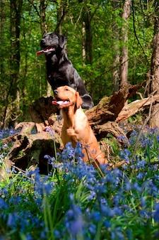 Hunde in einem wald