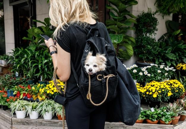 Hunde in new york city