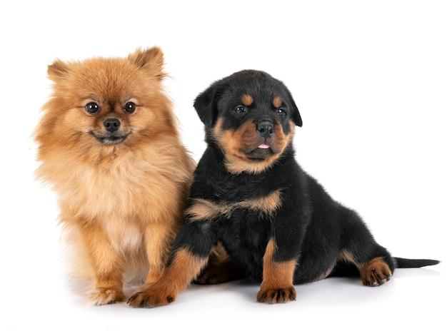 Hunde isoliert