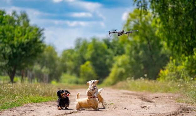 Hunde kleiner rassen spielen im freien. grüner naturhintergrund. ingwer und schwarzer hund.