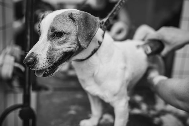 Hunde pflegen und baden, die sich um kleine freunde kümmern hochwertiges foto