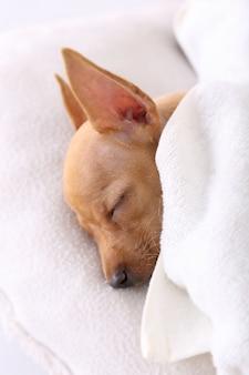Hunde schlafen unter der decke im bett