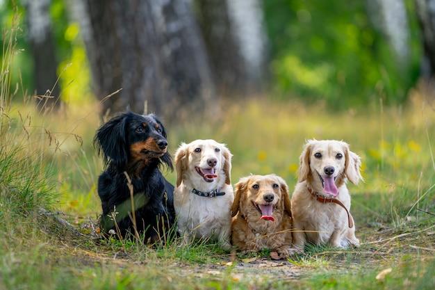 Hunde sitzen auf gras. unscharfer hintergrund. nette haustiere im garten.